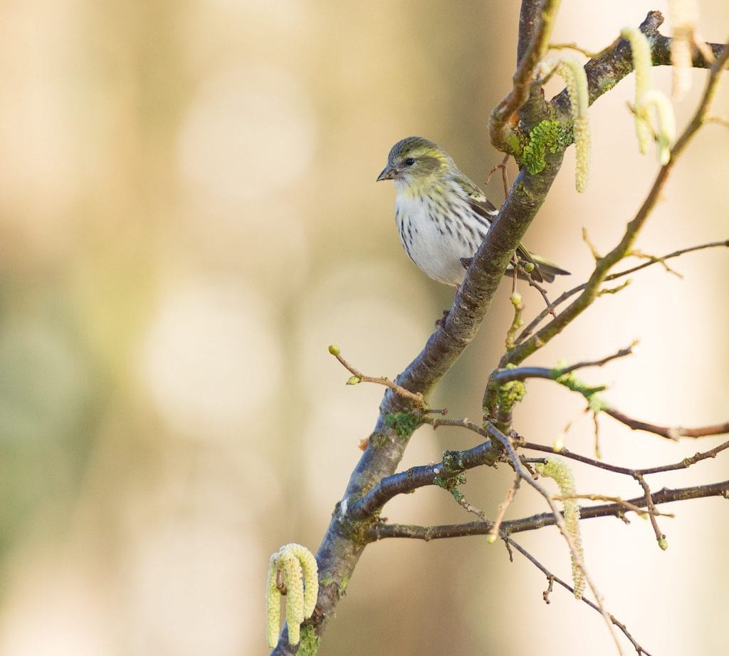 Bird spotted at Perivoli Lagoon House